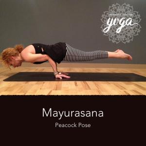 Mayurasana-SEY